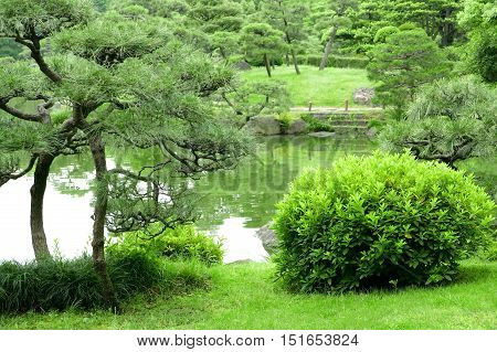 Green Plant, Tree And Lake In Zen Garden