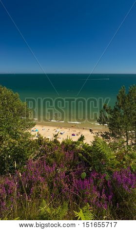 Beautiful pale yellow sands on the Dorset Coast with waves breaking on the shoreline from green seas under blue skies. Heather grows bright purple on the cliff tops.