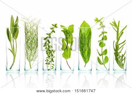 Close Up Bottles Of Fresh Aromatic Herbs . Sage, Rosemary, Sweet Basil Leaves ,fennel ,green Mint ,l