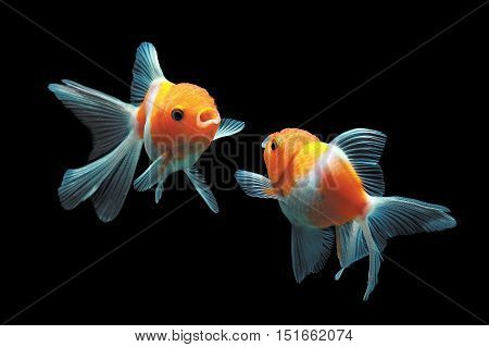 Fishbowl, the beauty of the fish in the water