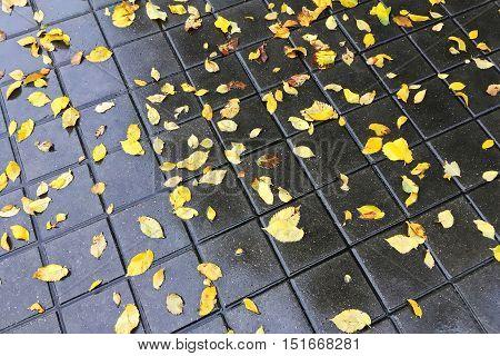 Autumnal Yellow Leaves On Wet Cobblestone Pavement
