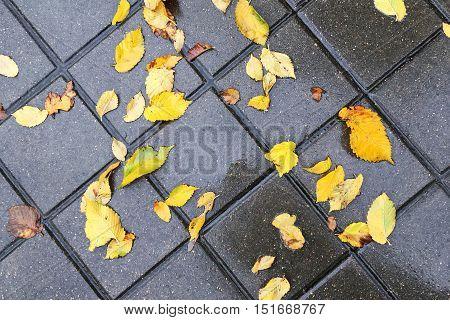 Wet Yellow Autumn Leaves On Cobblestone Pavement