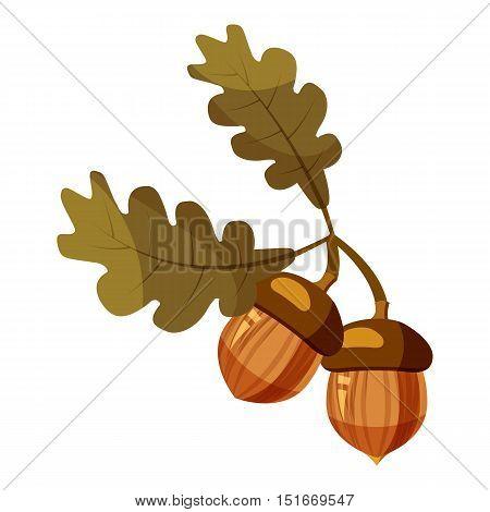 Acorn icon. Cartoon illustration of acorn vector icon for web