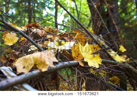 Vegetation in the depths of an autumn forest