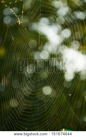 sunlight is playing on the lines of spider web