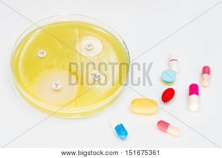 Sensitivity Tests On Mu Plate And Antibiotic.