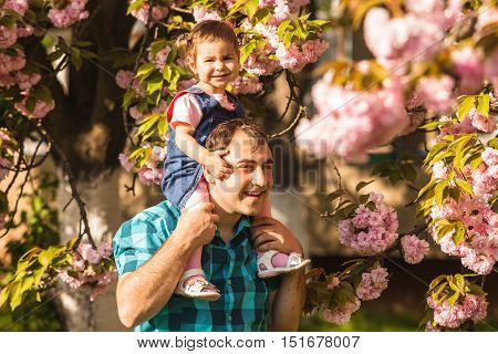 Girl is sitting on her daddy's shoulders against the backdrop of sakura blossoms