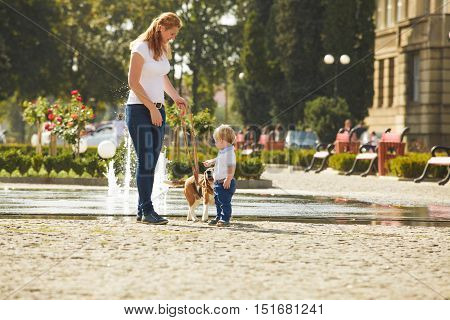 Little boy is walking the beagle dog with his mom