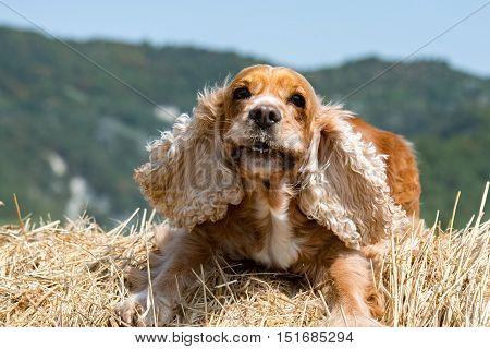 Dog Puppy Looking At You From Wheat Ball