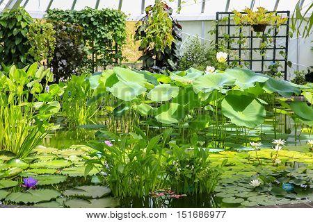 Heated Room Full Of Beautiful Lotus Flowers  Wellington Botanic Garden
