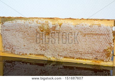 Full of fresh pure honey honeycomb in wooden frame