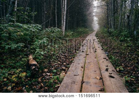 Wooden plank pathway through late autumn forest by foggy morning