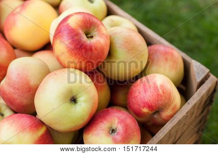 Lot of yellow and red apples in an old wooden crate