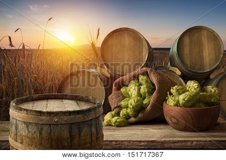 glass of beer with hop cones in the hop field