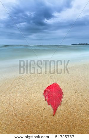 autumn leaves on the shore of the beach / bright landscape beauty of nature