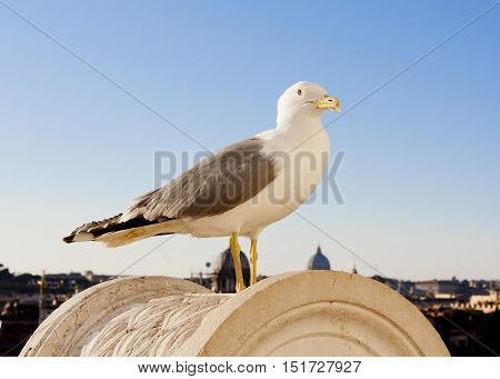 White gull on a rock against the blue sky