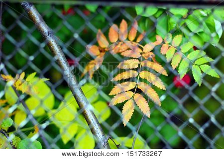 Steel grating fence, autumn, russian nature, leaf