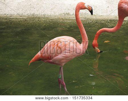 nice orange flamingo stuck in standing water