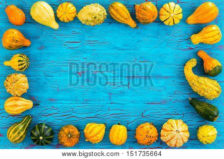 Frame Of Ornamental Pumpkins And Gourds