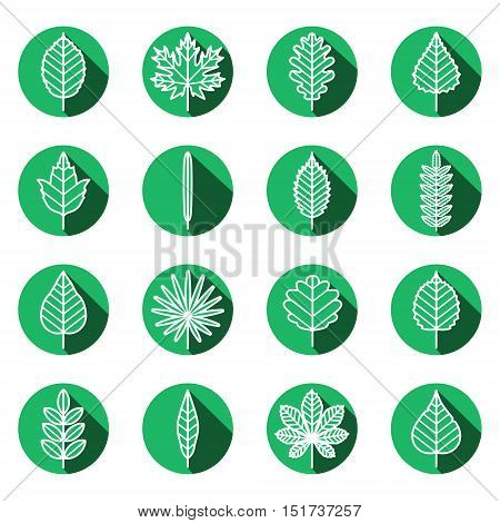Leaves types white-green outline icons vector set. Modern flat design.
