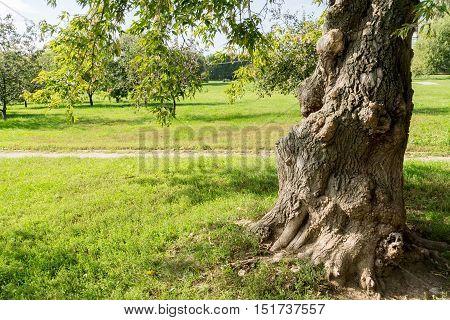 Deformed Trunk Tree