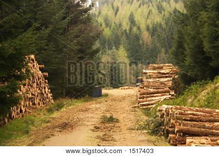 Land Management 2
