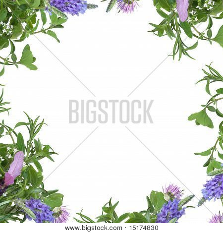 Herb Flower Border