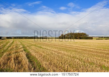 Harvested Field And Tyre Tracks