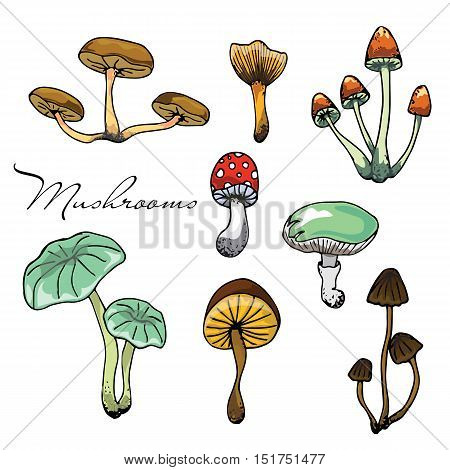 Nature illustration. Natural materials. Forest postcard. Assorted mushrooms. Edible and poisonous mushrooms. Seamless pattern