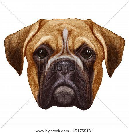 Original drawing of Boxer dog. Isolated on white background.
