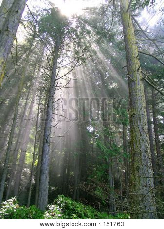 Sunbeam Forest