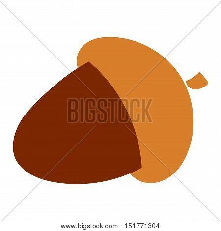 Dried acorns flat vector illustration. Acorns oak isolated on white.