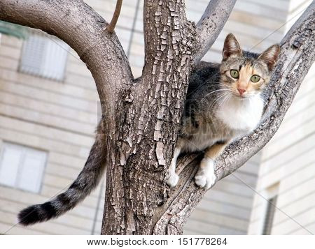Cat on a tree in Or Yehuda Israel February 2 2011