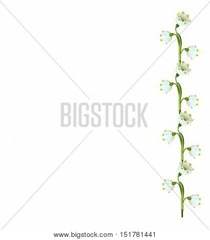 spring flowers snowdrops isolated on white background.