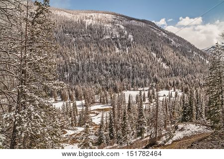 Mountains lodgepole pines (Pinus contorta) snow a valley a meandering stream and a blue sky with clouds on a May day in Yellowstone National Park