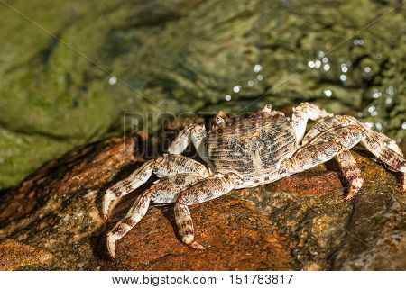 Wet sea crab on the stone at night.