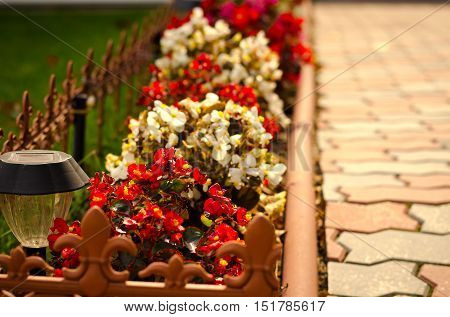 Stone path in the garden flanked with colorful flowers, fall background, autumn nature