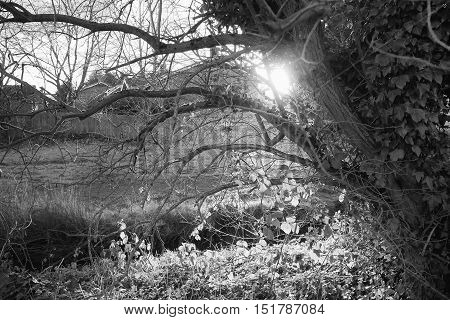 Bushes and trees in a residential area photographed with late afternoon backlit sunlight.