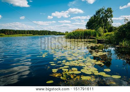 River Landscape with water lilies and reeds with blue sky in the background. Nobody