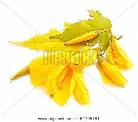 Hibiscus Flowers Photo Manipulating Concept