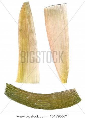 White Maize Leaves Pressed Isolated On White