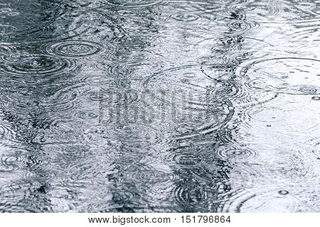 Rain Drops On Water Surface With Tree Reflection