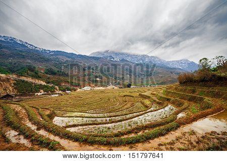 Rice field terraces in Sapa, Vietnam. Winter