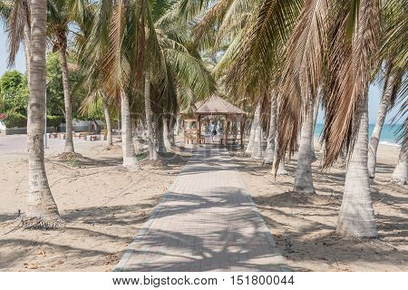 Cobblestone Walkway between palm trees on a beach