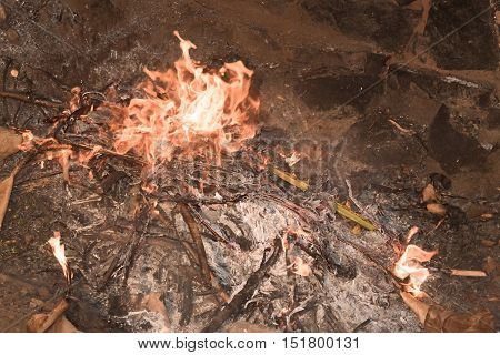 Dry leaves burning with red yellow flames in a pit