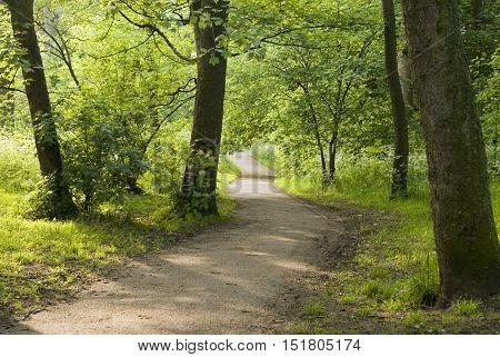 Sheffield, UK 03 05 2014: Pathway through trees on 03 May 2014 at Meersbrook Park, Sheffield, UK