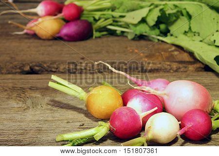 Fresh  Multi-coloured Radish