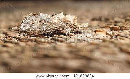 Moth On Wood Background