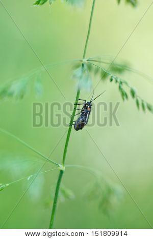 Bug On Wild Grass