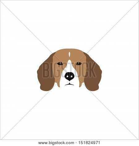 Beagle head isolated on white background. Purebred dog vector illustration.